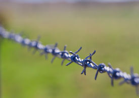 picture of barbed wire fence  - close up of a farmers barbed wire fence - JPG