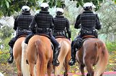 Police Equestrian Unit
