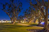 Coral Trees in North Embarcadero Marina Park at night in San Diego, California.