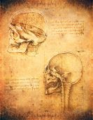 stock photo of leonardo da vinci  - old dirty leonardo da vinci style skull illustration - JPG