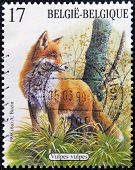 A stamp printed in Belgium shows fox (Vulpes vulpes)
