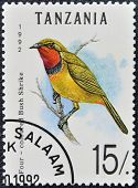 A stamp printed in Tanzania shows four - coloured bush shrike