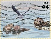 A stamp printed in USA shows two otters eating a hedgehog and a seabird