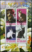 Stamps printed in Burundi shows cats