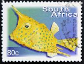 A stamp printed in RSA shows longhorn cowfish Lactoria cornuta