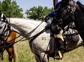 picture of teepee  - US Cavalry horses in reenactment of Battle of Bighorn - JPG