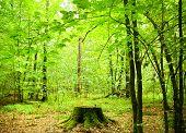 summer forest.