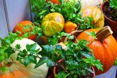 Holiday Fall Decor