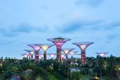 SINGAPORE-FEB 14: A Night view of The Supertree Grove at Gardens by the Bay on Feb 14, 2014 in Singa
