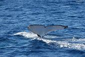 WhaleTailfin
