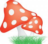 illustration of typical red mushroom style toad stools