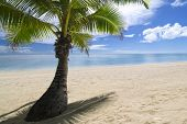 Shaded palm tree on tropical sandy beach by lagoon. Aitutaki