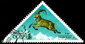 Vintage  Postage Stamp. Ibex.