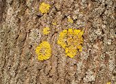 Tree Bark Moss-covered