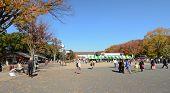 Tokyo - November 22: Visitors Enjoy Cherry Blossom In Ueno Park