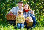 Family in  harvest apples
