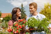 Gardening in summer - happy couple in garden with fresh herbs and red flowers