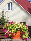 Flowerpot With Petunia Flowers Near A Home