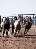 pic of casper  - rodeo stock horses run in the arena before the start of the O - JPG