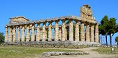 the greek temple of Cecere - Paestum Italy