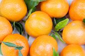 image of clementine-orange  - orange fresh clementines with leafs as background - JPG