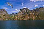 Fjord Naeroyfjord In Norway - Famous Unesco Site