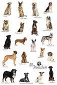 Dog breeds poster in Dutch