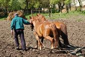 picture of horse plowing  - Ploughing the Field with Horses - JPG