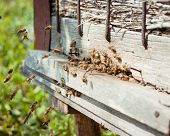 stock photo of swarm  - Honey bees swarming and flying around their beehive - JPG