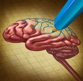 foto of human beings  - Repairing the brain and restoring lost memory medical concept as a human thinking organ with a missing portion being redrawn with a blue pencil as a symbol and - JPG