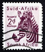 Postage Stamp South Africa 1954 Zebra, Animal