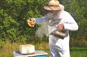 Experienced senior beekeeper holding honeycomb from small wedding beehive in apiary