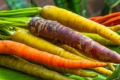 stock photo of root-crops  - Organic Heirloom carrot varieties of purple - JPG