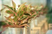 Decoration Plants
