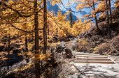 Wooden way in colorful autumn forest