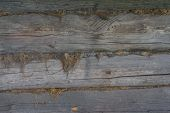 The Wooden log wall