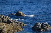 Pacific Grove-Monterey Bay Seascape