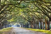 stock photo of tree lined street  - Savannah - JPG