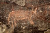 Bushmen (san) rock painting of an antelope, Karoo region, South Africa
