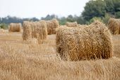 Hay Bale Or Sheaf In A Cold Day