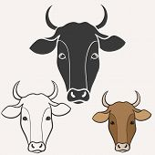 picture of cow  - Vector illustration of cow - JPG