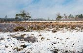 Dutch Nature Reserve On A Harsh Wintry Day