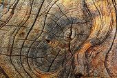 Old Wood Cut Texture Background