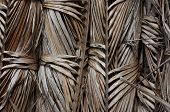 Dry Palm Leave