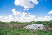 pic of fertilizer  - Bags of fertilizer placed in the land for farming gardening - JPG