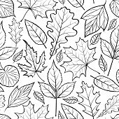 picture of backround  - Vector illustration of seamless pattern with leaves on white backround - JPG