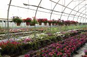 Flower Farm Nursery