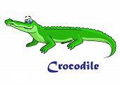 Colorful green cartoon crocodile