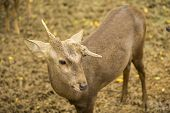 image of deer horn  - Male deer with Strange horn in the zoo  - JPG