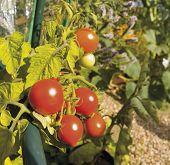 Garden Organic Ryton Ryton Gardens Warwickshire Midlands England poster